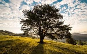 tree-338211__340