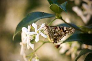 butterfly-3464415__340